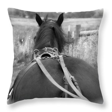 Throw Pillow featuring the photograph Carraige View Horse by William Havle