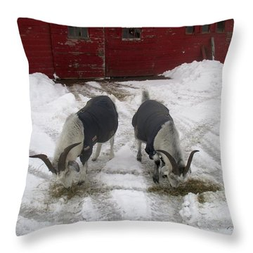 Cashmere Harness Goats 10 Throw Pillow
