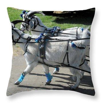 Cashmere Harness Goats IIi Throw Pillow