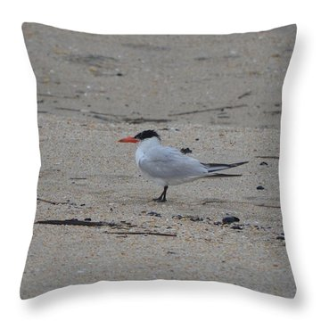Throw Pillow featuring the photograph Caspian Tern by James Petersen