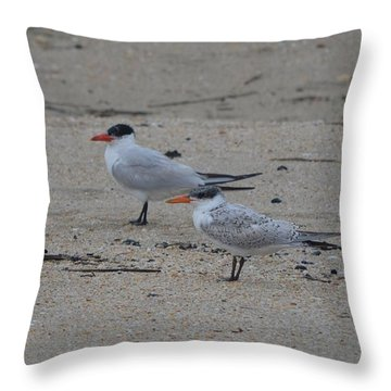 Throw Pillow featuring the photograph Caspian Tern Young And Adult by James Petersen