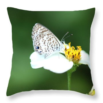 Throw Pillow featuring the photograph Cassius Blue On Wildflower by Greg Allore