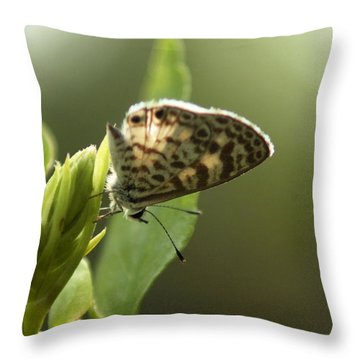 Cassius On Plumbago Throw Pillow
