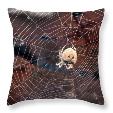 Cat Faced Spider Throw Pillow
