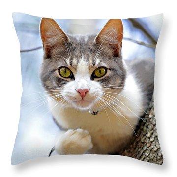 Cat In A Tree Throw Pillow by Susan Leggett