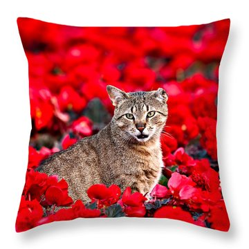 Cat In Red Throw Pillow