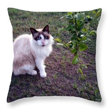 Throw Pillow featuring the photograph Cat 'n Orange Tree by Joseph Baril