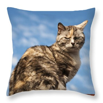 Cat On A Hot Brick Wall Throw Pillow by Steve Purnell