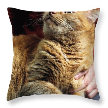 Cat On Lap Throw Pillow by James L. Amos