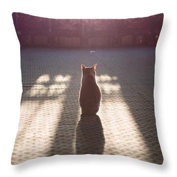 Cat Sitting Near Window Throw Pillow by Matteo Colombo
