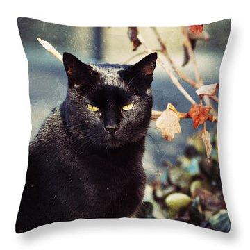 Cat Stevens Throw Pillow by Trish Tritz