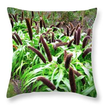 Cat Tail Plants Throw Pillow by Deborah  Crew-Johnson