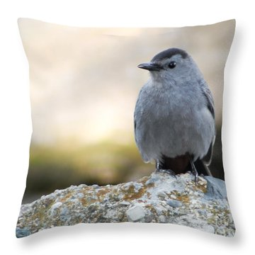 Throw Pillow featuring the photograph Catbird Sitting Pretty by Anita Oakley