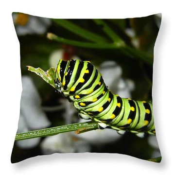 Throw Pillow featuring the photograph Caterpillar Camouflage by Bill Swartwout