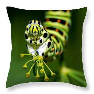 Caterpillar Of The Old World Swallowtail Throw Pillow
