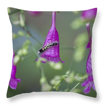 Caterpillar Playground  Throw Pillow by Nola Lee Kelsey