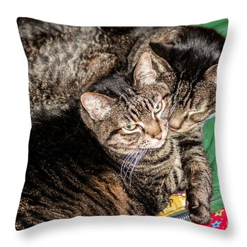 Cats Cuddling Throw Pillow by Sue Smith