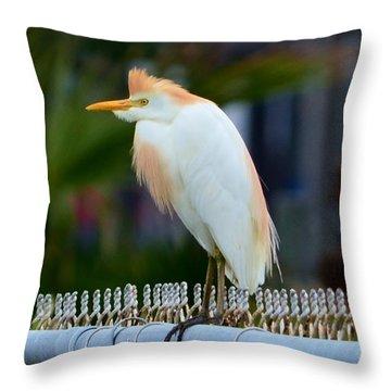 Cattle Egret Breeding Plumage Throw Pillow by Debra Martz