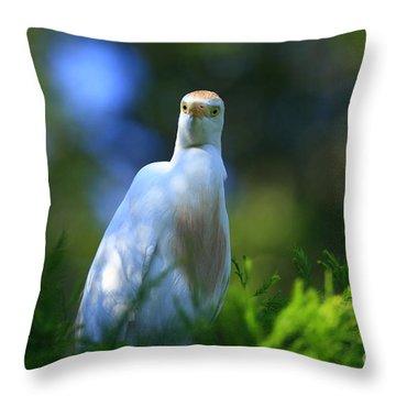 Cattle Egret Eyes Throw Pillow