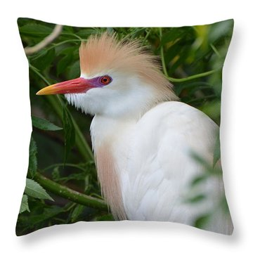 Cattle Egret In Breeding Season Throw Pillow by Jodi Terracina