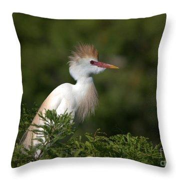 Cattle Egret No. 5 Throw Pillow
