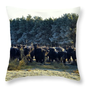 Galloway Throw Pillows