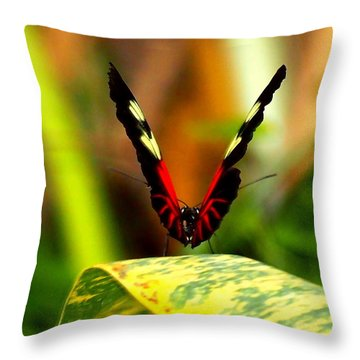 Throw Pillow featuring the photograph Cattleheart Butterfly  by Amy McDaniel