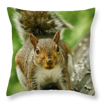 Caught In The Act Throw Pillow by Lois Bryan