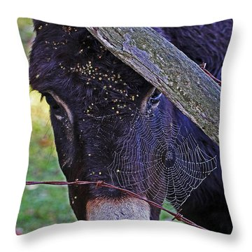 Caught In The Web Throw Pillow