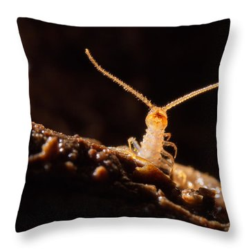 Cave Centipede Throw Pillow