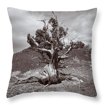 Cedar Landscape Throw Pillow
