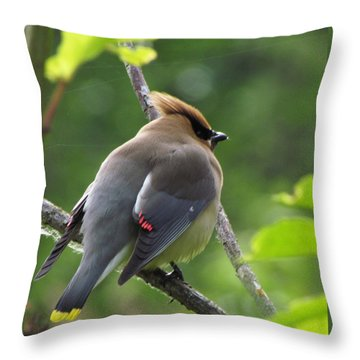 Throw Pillow featuring the photograph Cedar Waxwin In Breeding Plumage by I'ina Van Lawick