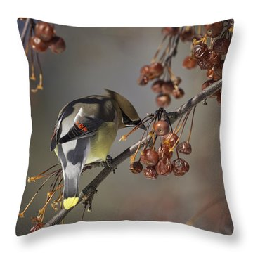 Cedar Waxwing Eating Berries 7 Throw Pillow