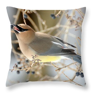 Cedar Waxwing Feeding Throw Pillow