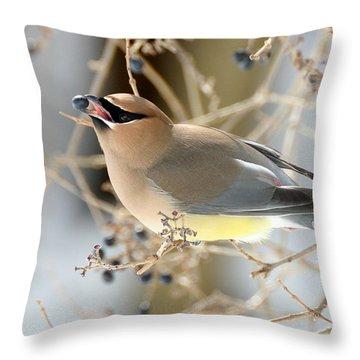 Cedar Waxwing Feeding Throw Pillow