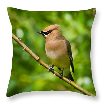 Cedar Waxwing Gathering Nesting Material Throw Pillow