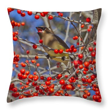 Cedar Waxwing In The Act Of Swallowing A Possumhaw Fruit Throw Pillow