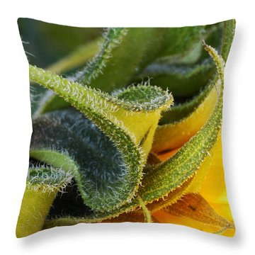 Celebration Sunflower Throw Pillow by Wendy Wilton