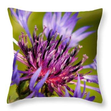 Centaurea Montana Throw Pillows
