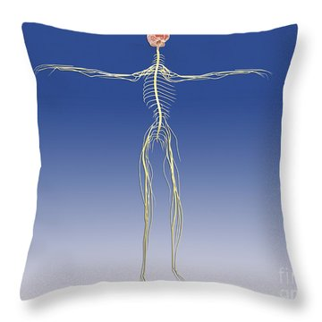 Central Nervous System With Human Brain Throw Pillow by Stocktrek Images