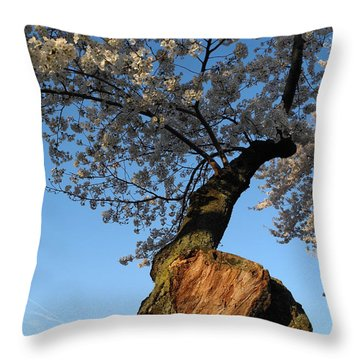 Throw Pillow featuring the photograph Century Old Sakura by Yue Wang