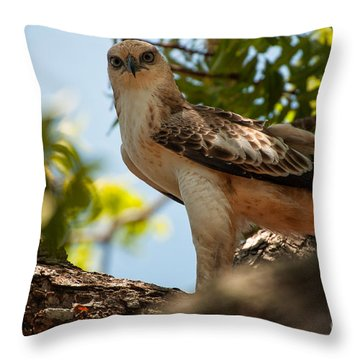 Ceylon Hawk Eagle Throw Pillow