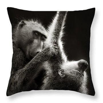Chacma Baboons Grooming Throw Pillow by Johan Swanepoel