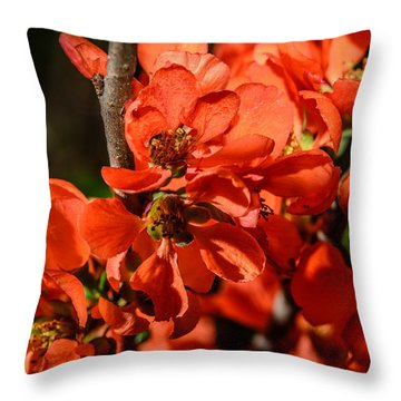 Chaenomeles Throw Pillow by Michael Goyberg