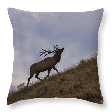 Challenge Of The Bull Elk Throw Pillow by Sandra Bronstein