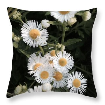 Chamomile Flowers. Throw Pillow