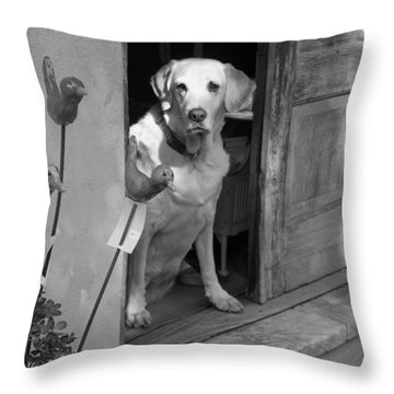 Charleston Shop Dog In Black And White Throw Pillow by Suzanne Gaff