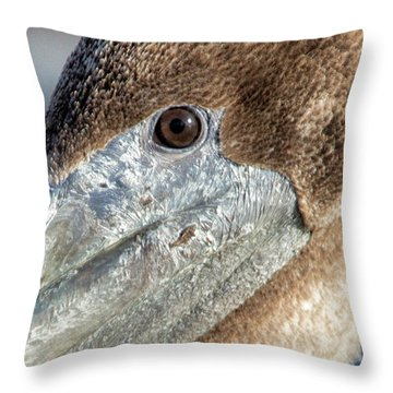 Charley Throw Pillow by Phil Mancuso