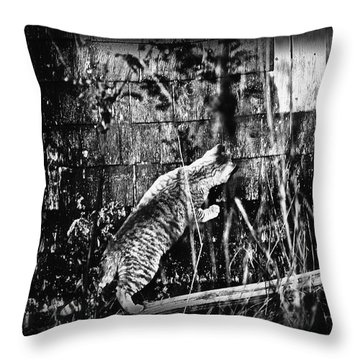 Chasing Shadows Throw Pillow by Susan Capuano