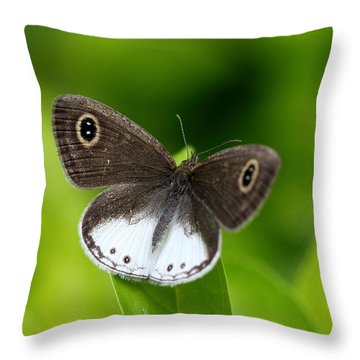 Chasing The Dream Throw Pillow by Ramabhadran Thirupattur
